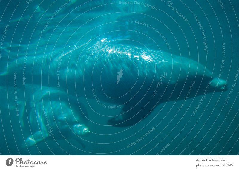 Water Ocean Blue Vacation & Travel Dive Mammal Australia Cyan Whale Dolphin