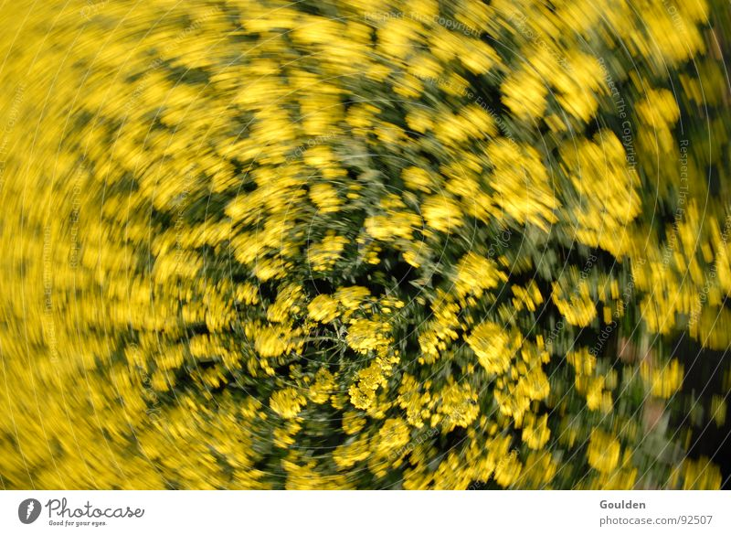 Flower Plant Yellow Movement Field Aviation Bee Ecological Organic produce Canola Swing
