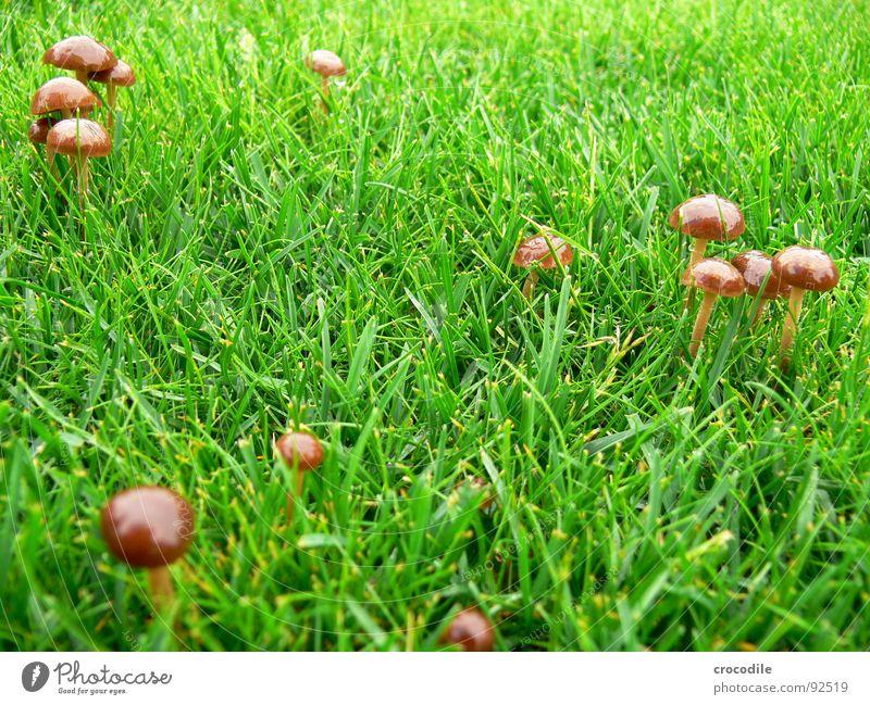 Green Grass Brown Lawn Stalk Hat Mushroom Poison Shoot Mushroom cap Edible