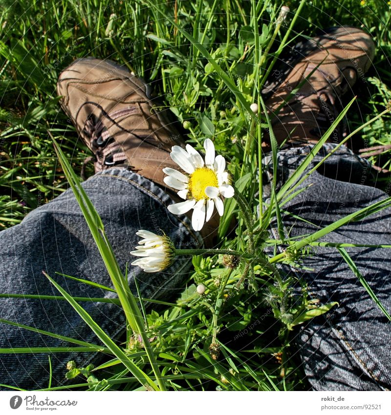 streaks Rest Break Go crazy Relaxation Meadow Grass Green Flower Daisy Mediocre Footwear Pants Hiking boots White Yellow Black Spring Fear Panic Protection