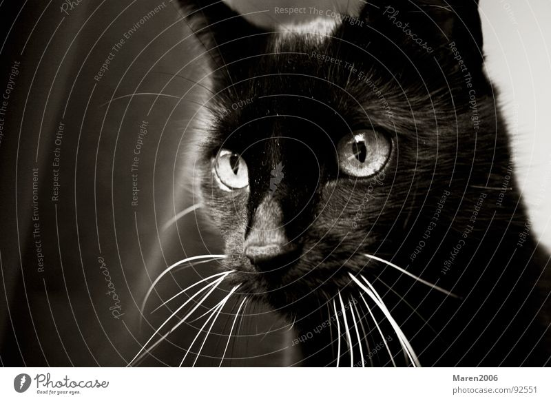 Beautiful Joy Black Animal Eyes Life Playing Cat Funny Electricity Sweet Cute Observe Concentrate Hunting