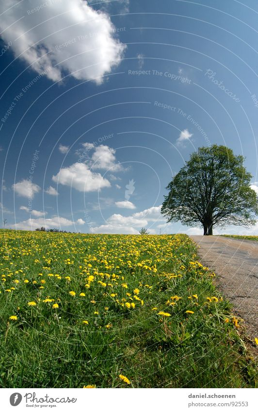 Beautiful Sky Tree Green Blue Summer Yellow Street Meadow Spring Lanes & trails Dandelion