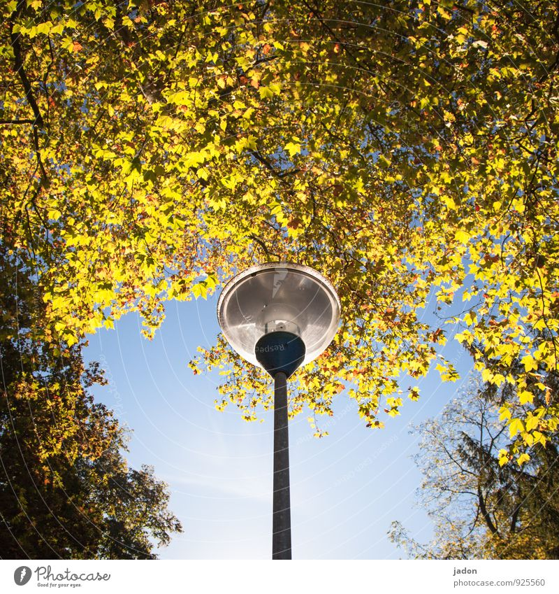 autumn light. Lifestyle Elegant Design Energy industry Technology Environment Plant Autumn Beautiful weather Tree Leaf Park Glass Bright Blue Yellow