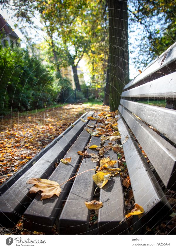 long bank. Calm Environment Nature Plant Autumn Beautiful weather Tree Leaf Park Deserted Lanes & trails Sit Yellow Gold Orange Romance Design Relaxation Idyll