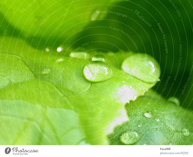water drops Green Leaf Macro (Extreme close-up) Close-up Drops of water Water