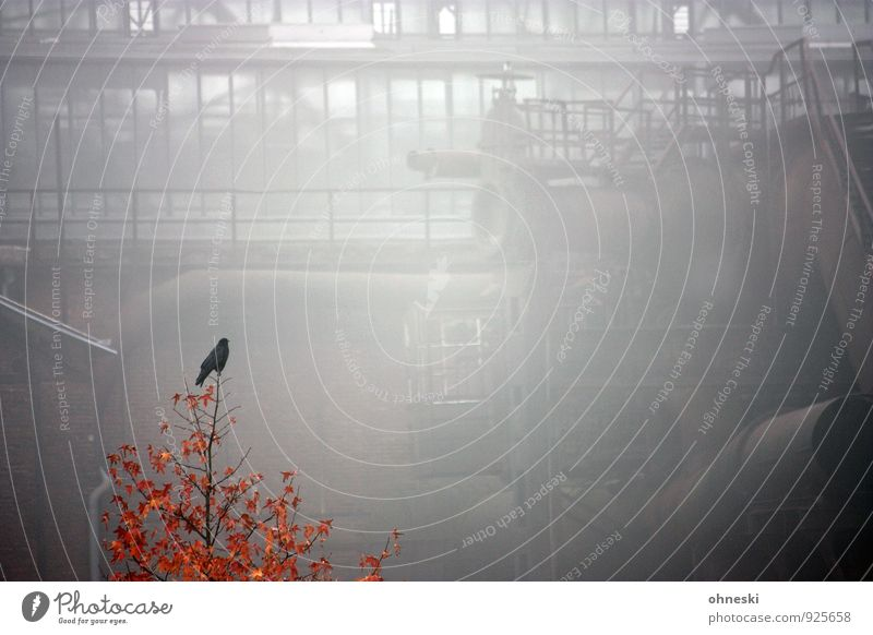 Early Bird Autumn Fog Tree The Ruhr Bochum Industrial plant Century Hall 1 Animal Old Crisis Stagnating Colour photo Subdued colour Exterior shot