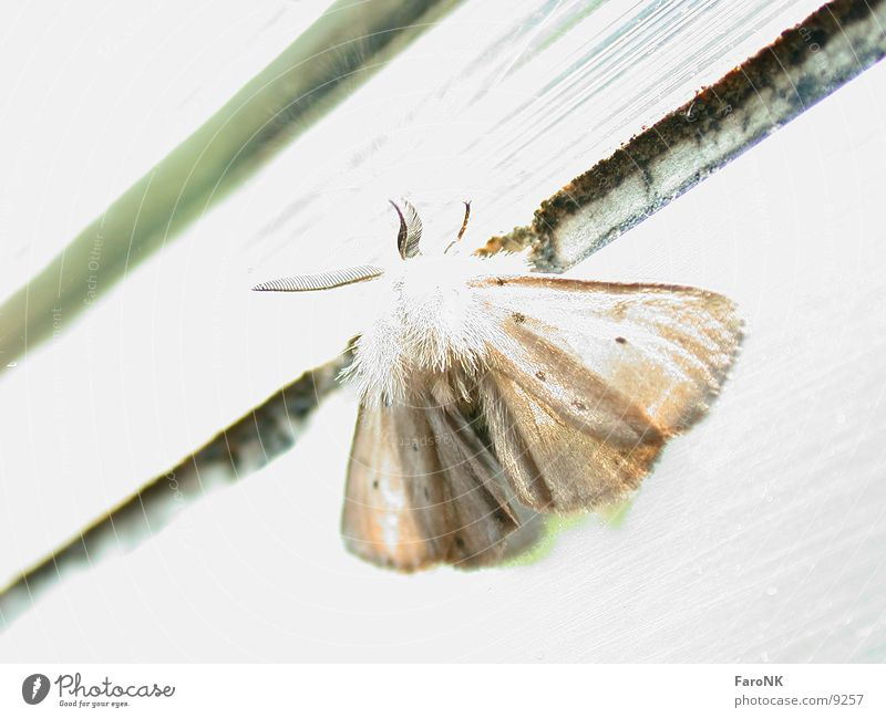 Animal Transport Insect Butterfly
