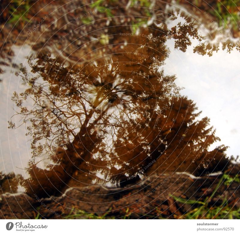 puddley Puddle Tracks Forest Tree White Brown Green Mirror Reflection Rain Grass Mud Clouds Dark Wet Dirty Water track gate Sky Drops of water Earth Beautiful