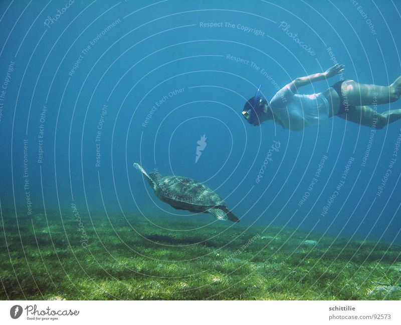 Woman Water Ocean Green Blue Meadow Air Lawn Leisure and hobbies Dive Aquatics Turtle Snorkeling