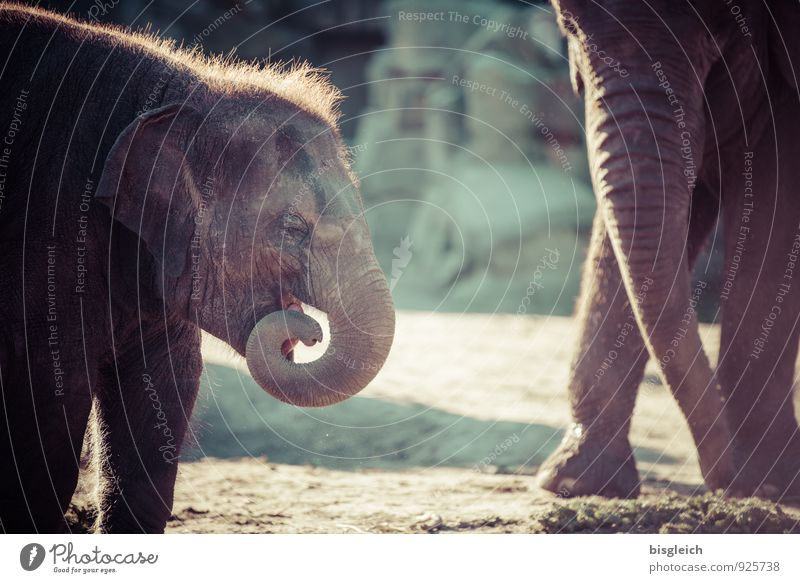 Green Animal Baby animal Playing Gray Small Brown Stand Cute To feed Elephant Love of animals Baby elefant