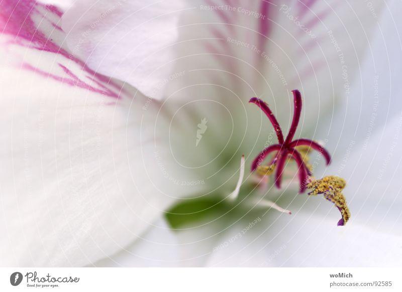Nature White Red Plant Flower Yellow Spring Garden Blossom Park Pink Delicate Depth of field Pistil Pollen Blossom leave