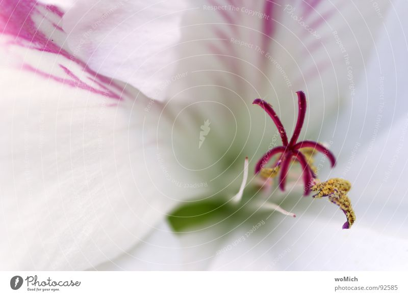 snow white Blossom Flower Blossom leave Pollen Spring Light Park Plant Delicate White Red Pink Yellow Abstract Depth of field Blur Maximum aperture Calyx Pistil