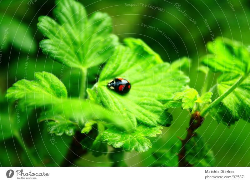ladybugs Ladybird Insect Green Animal Small Stalk Bushes Tree Growth Environment Summer Garden Flying Wing Beetle Nature