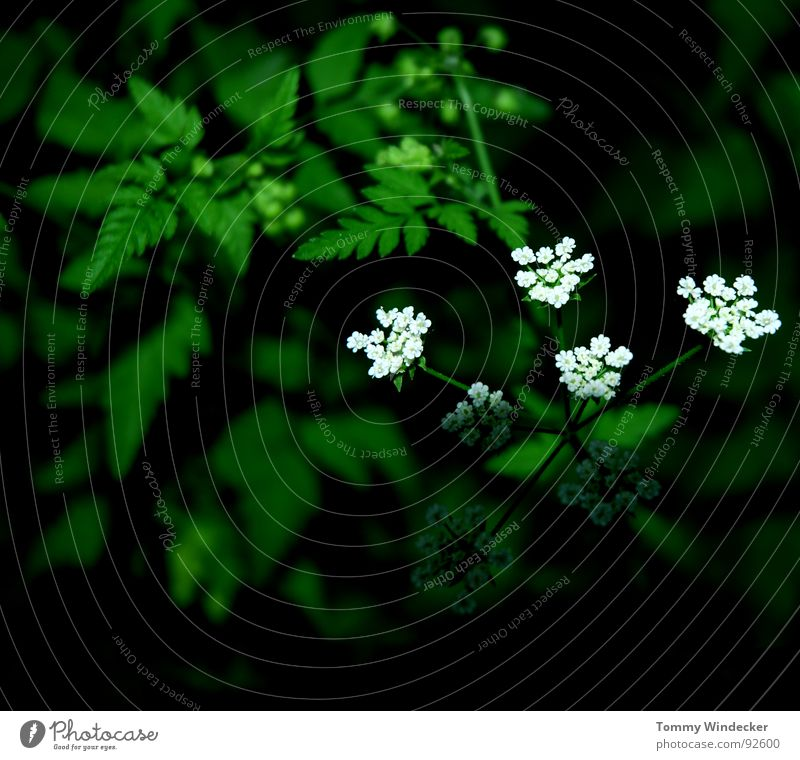 Nature Plant Green Colour Summer Flower Landscape Warmth Spring Garden Growth Illuminate Fresh Wet Soft Seasons