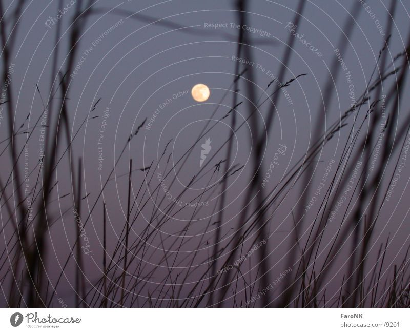 moon Full  moon Grass Celestial bodies and the universe Moon