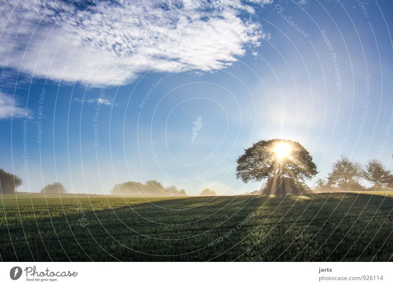 Sky Nature Beautiful Summer Tree Landscape Calm Clouds Forest Environment Autumn Meadow Grass Spring Natural Bright
