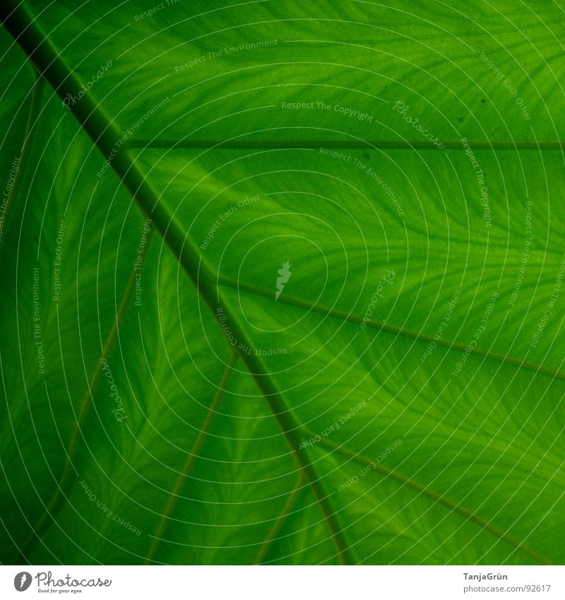"simply ""GREEN"" Botany Green Leaf Thread Grating Stripe Parallel Pattern Vessel Painted Garden Park Environment Houseplants Structures and shapes Branch Colour"