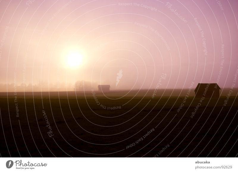 forever silence Pink Evening sun Meadow Fog. Dreamlike farmland Nature Sun