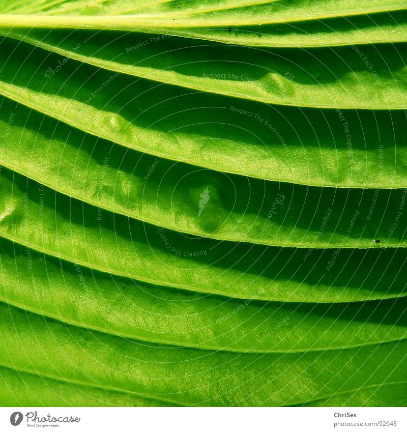 Nature Green Plant Leaf Animal Spring Garden Park Herbaceous plants Hosta