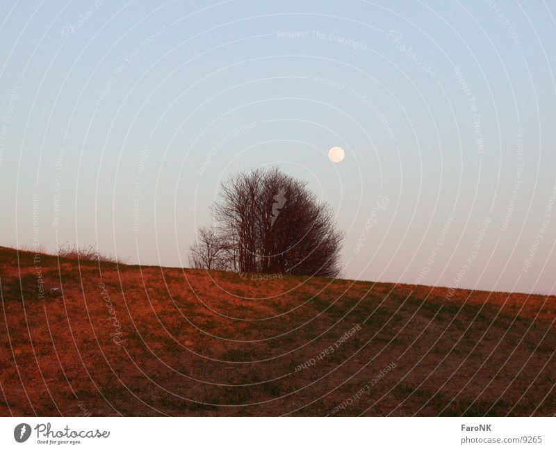Red earth Tree Field Moon Sky