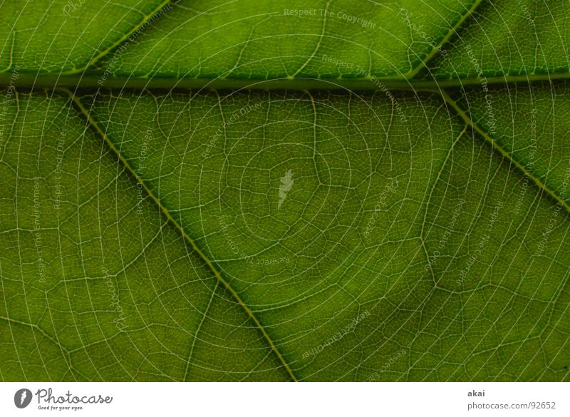 Sheet 9 Plant Green Botany Part of the plant Creeper Verdant Environment Bushes Back-light Leaf Background picture Tree Near Photosynthesis Mature Vessel Detail