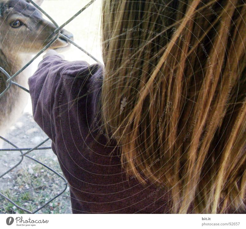 REH-BACK Roe deer Doe eyes Fawn Zoo Enclosure Barn cagey Animal Park Sunday Saturday Child Brown Light brown Auburn Hair and hairstyles Touch Delicate Caress
