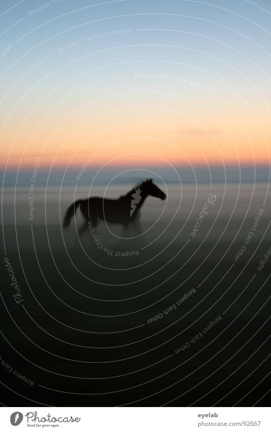 Sky Green Summer Sun Loneliness Black Meadow Movement Grass Freedom Moody Horizon Weather Fog Walking Beautiful weather