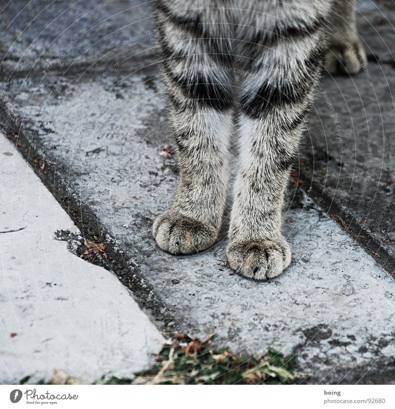 Gray Cat Animal foot Places Trust Science & Research Pelt Mammal Paw Seating Pet Timidity Partially visible