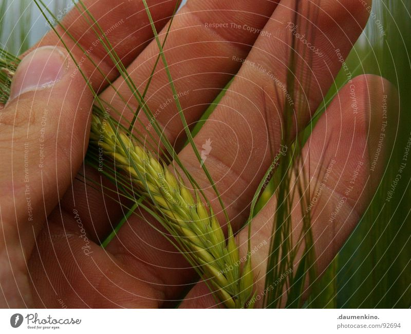 Oh Bauer... Hand Fingers Sowing Field Stripe Touch Fingernail Farmer Barley Wheat Nutrition Work and employment Trust Grain Wind Emotions Harvest Food Nature