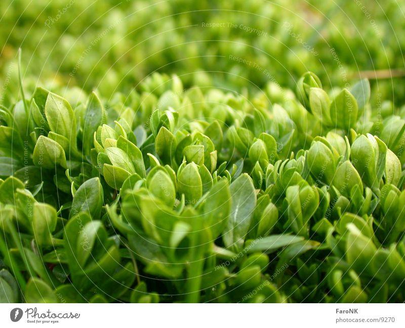fresh green Green Leaf Plant