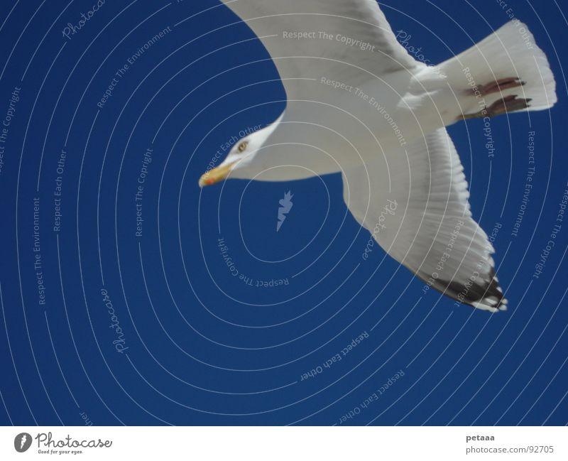 seagull Seagull Beak Bird Sky Blue Aviation Wing Feather