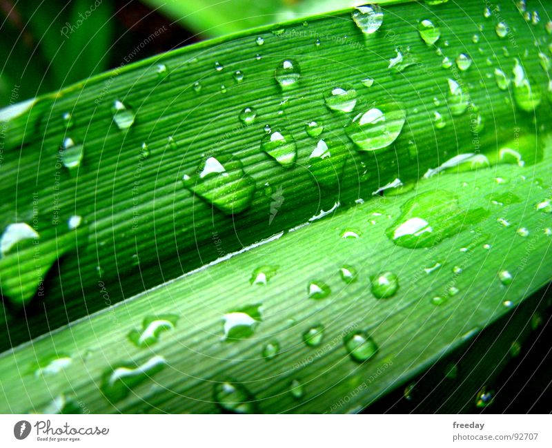 ::: After the rain ::: Wet Rain Drops of water Damp Round Background picture Near Photosynthesis Green Deities Plant Bright green Vessel Lower Saxony