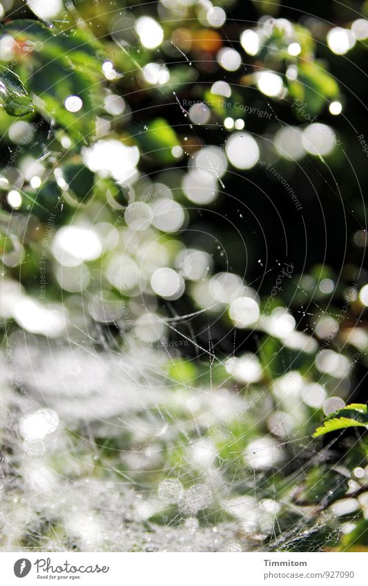 Indian summer. Plant Leaf Line Looking Esthetic Natural Green Black White Emotions Indian Summer Cobwebby Spider's web Point Dark Drop Autumn Colour photo