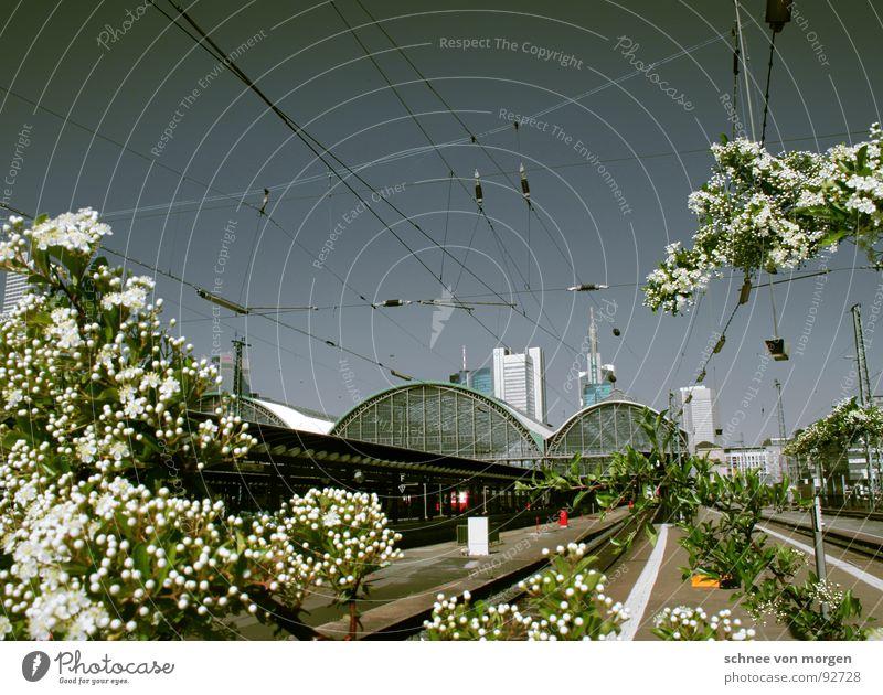 Sky Tree Flower Blue High-rise Blossoming Train station Frankfurt