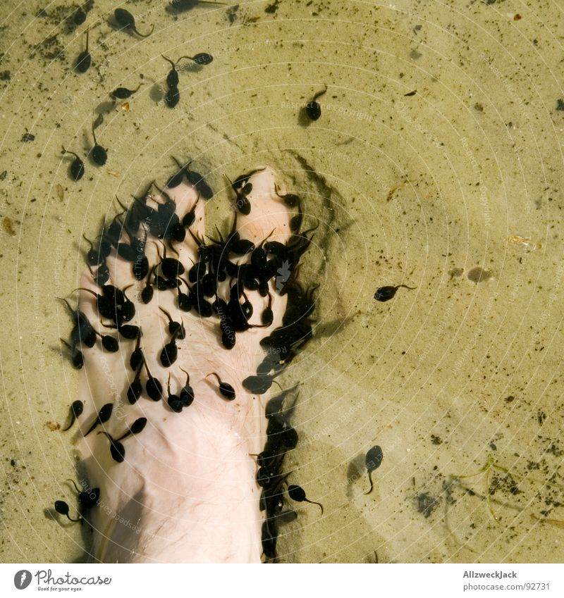 Nature Water Beach Feet Lake Sand Might Anger Frog Aggravation Toes Attack Offspring Flock Toad Tadpole