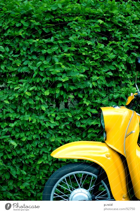 I can't think of anything. Swallow Scooter Yellow Motorcycle Hedge Bushes Vintage car Detail Section of image Partially visible Retro Old Old fashioned Iconic