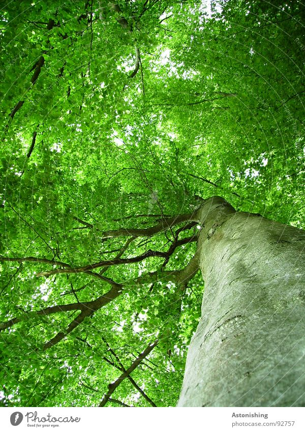 Nature Plant Green Summer Tree Leaf Environment Gray Brown Bright Growth Perspective Tall Branch Beautiful weather Tree trunk