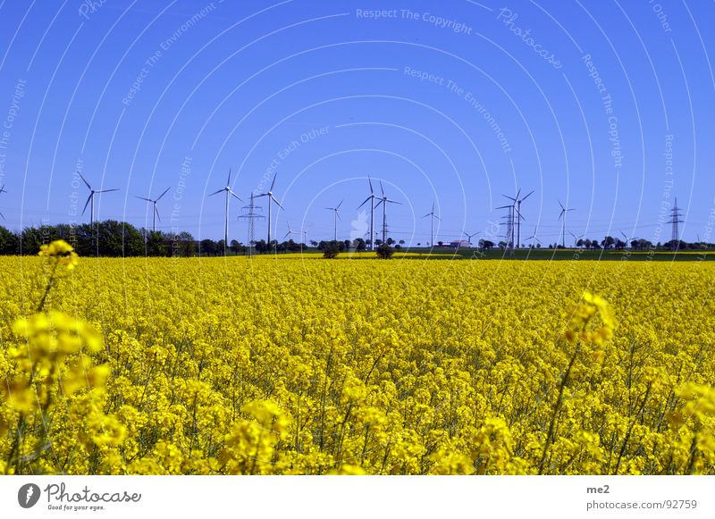 Nature Summer Joy Landscape Wind energy plant Blue sky Renewable energy Canola field Paderborn district