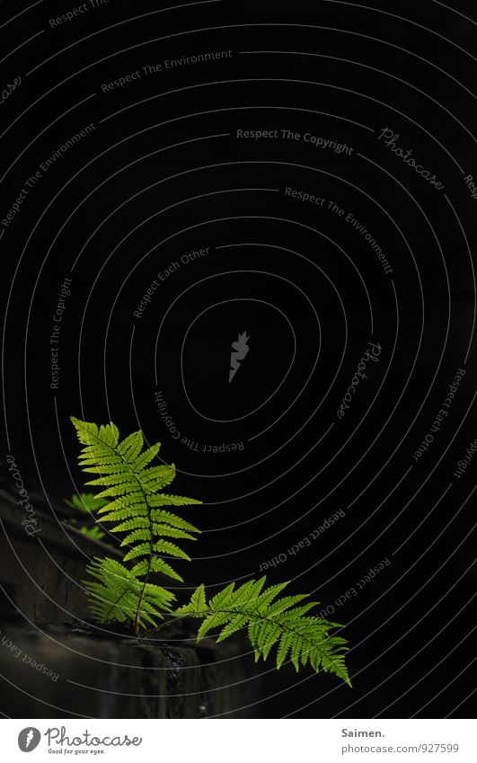 fern table Nature Plant Fern Leaf Foliage plant Wild plant Illuminate Natural Beautiful Green Black Struggle for survival Life Natural color Dark Survive