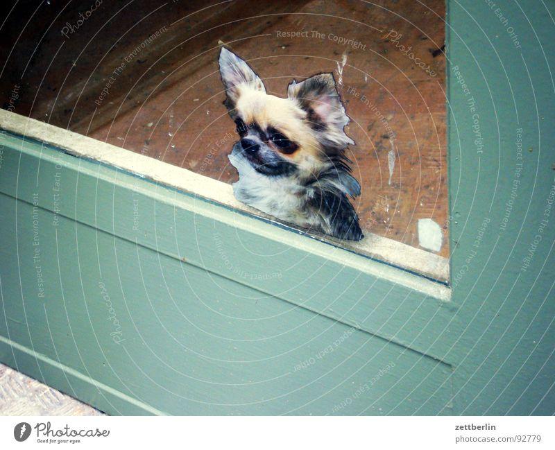 Dog Door Safety Decoration Obscure Entrance Label Way out Mastiff Hound Beast Watchdog Glass door Police dog