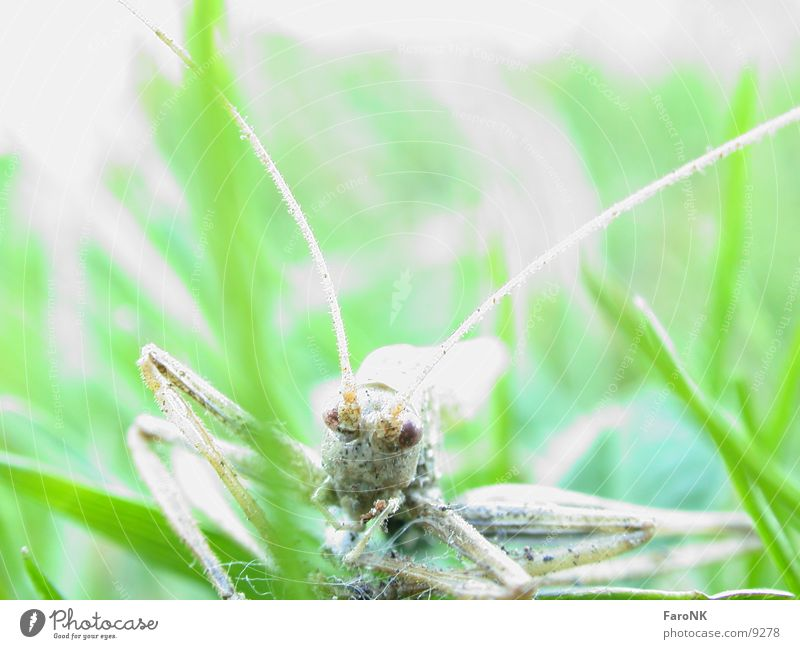 Death Insect Locust
