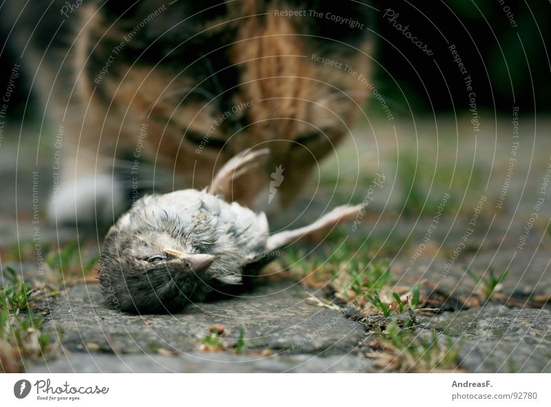 fast food Cat Bird To feed Catch Land-based carnivore Beak Kill Cold Sparrow Hunting Domestic cat food chain Death Feather Life