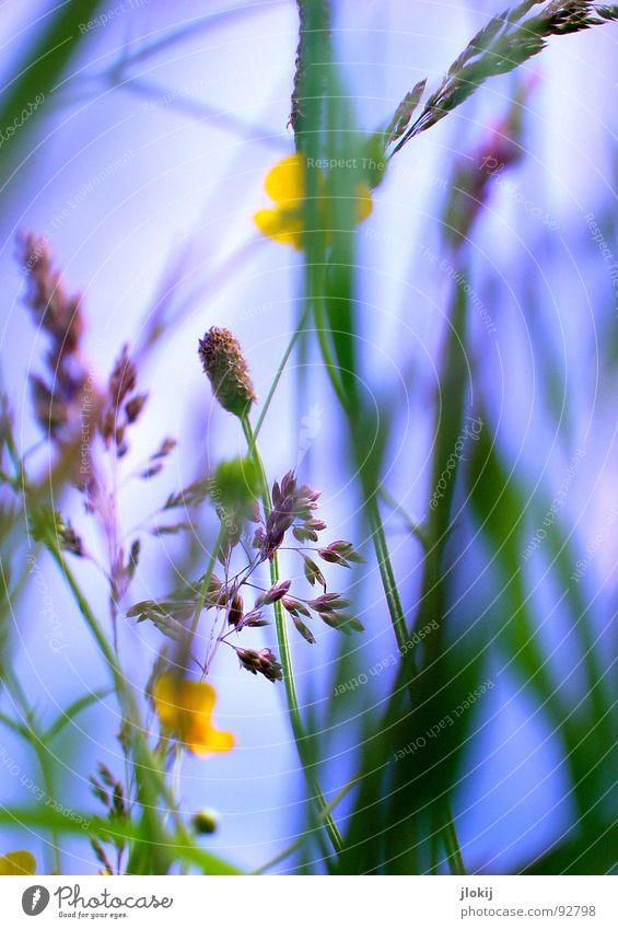 Sky Nature Blue Green Plant Sun Meadow Grass Movement Spring Lamp Wind Field Glittering Growth Violet
