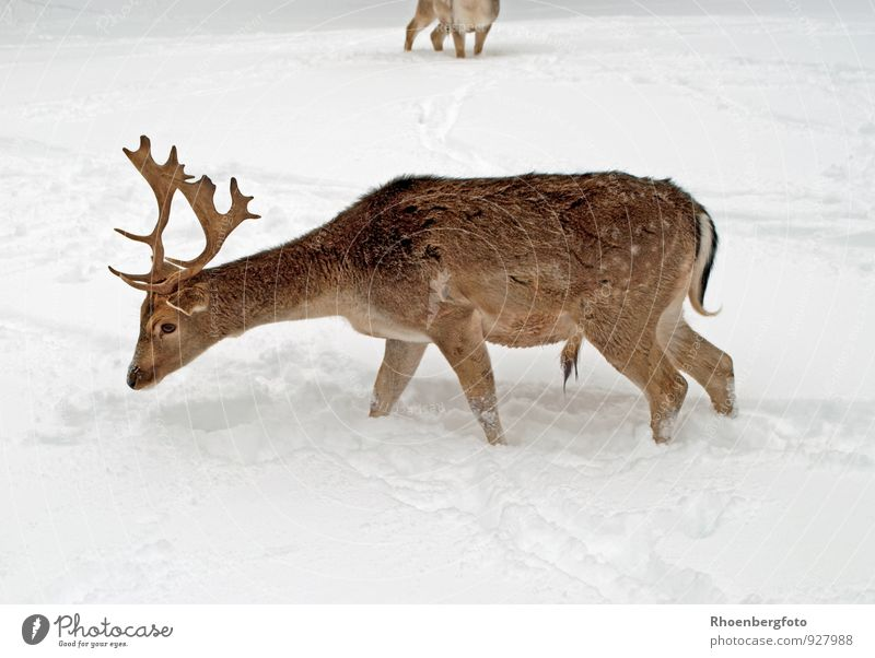 Nature Beautiful Landscape Calm Animal Winter Forest Snow Eating Brown Ice Snowfall Wild animal Wet Frost Good