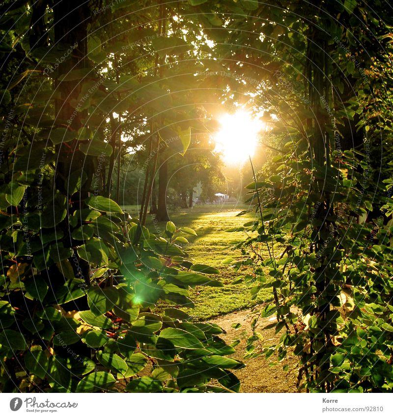 Nature Green Calm Leaf Life Autumn Garden Park Contentment Romance Peace Retirement Harmonious Fairy tale Paradise Tendril