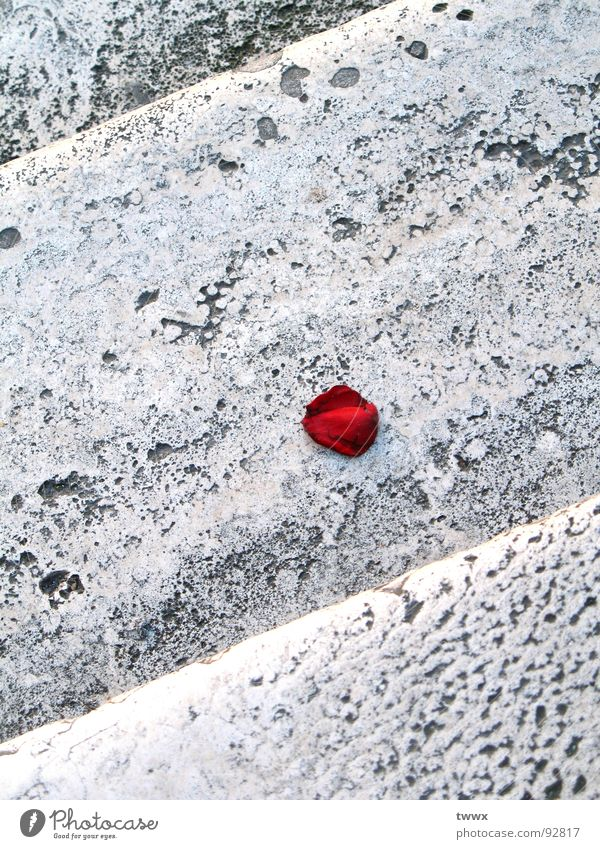 Red Sadness Stone Stairs Gloomy Romance Rose Transience Hollow Fragrance Surrealism Blossom leave Limp Remainder Valentine's Day Stony