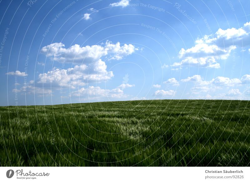 Sky White Green Blue Clouds Relaxation Spring Field Glittering Horizon Agriculture Cornfield Peaceful Barley Barleyfield
