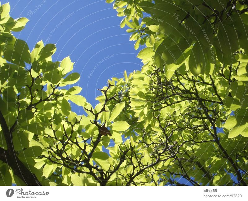 leaf canopy Leaf Roof Tree Back-light Beautiful weather Lighting Summer Physics Multiple Macro (Extreme close-up) Close-up Sky Transparent sun sunny Warmth Many