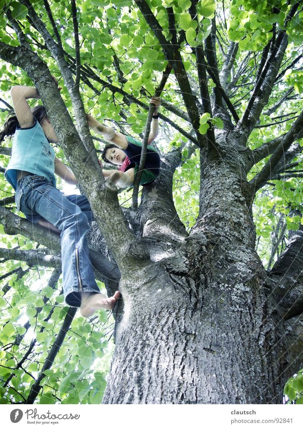 I also come ... Tree Tall Leaf Child Boy (child) Girl Playing Action Forest Joy Climbing Enthusiasm fun Nature Above