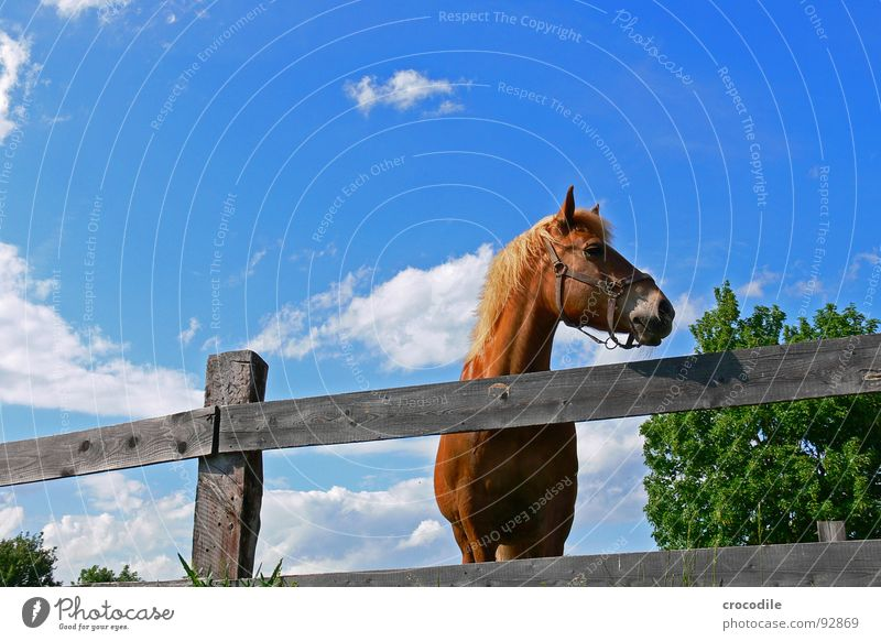 left is free! Horse Rotate Animal Tree Fence Gloomy Boredom Summer Hot Physics Mammal Looking Neck Eyes Ear Warmth